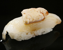 Thread-sail filefish nigiri sushi