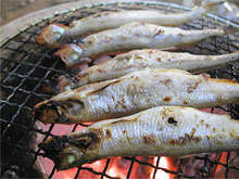 Charcoal grilled shishamo smelt