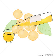 Apricot Liqueur
