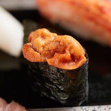 Sea urchin in salt water