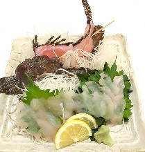 Stonefish sugata-zukuri (sliced sashimi served maintaining the look of the whole fish)