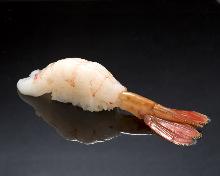 Botan shrimp