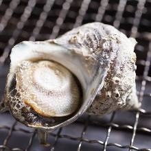 Grilled turban shell