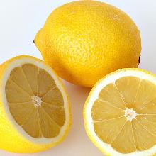 自家製 塩レモンサワー