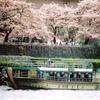 Sakura Lunch Yakatabune (Houseboat)
