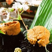 Raw sea urchin