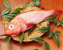 Kichiji rockfish (salt grilled or simmered)