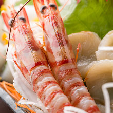 Ama ebi(northern shrimp) sashimi