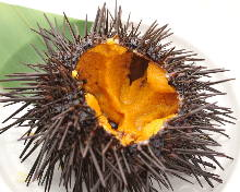 Grilled sea urchin