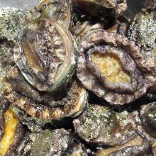 Live abalone (sashimi or grilled)
