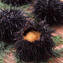 Uni(sea urchin)