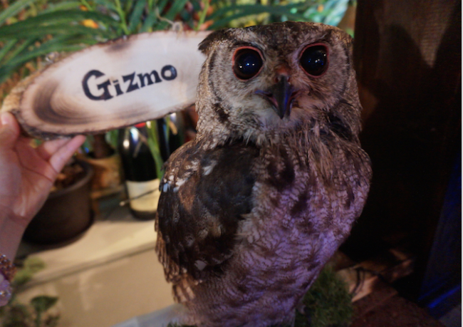 owl14