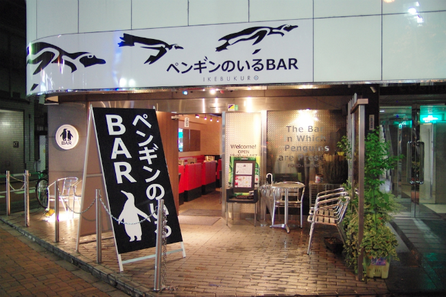 Experiencing the Only Penguin Bar in Tokyo