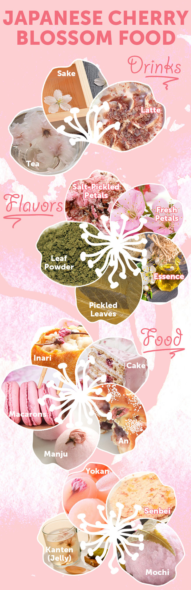 food sakura blossom cherry drinks drink infographic celebrate season japan mochi types