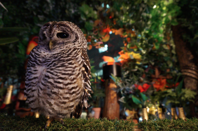 Swooping into a New Owl Cafe in Tokyo: Akihabara's Owl no Mori
