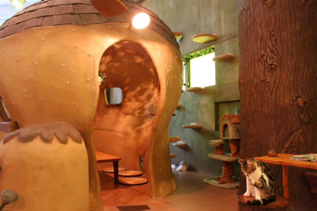 Tokyo Cat Cafe: Find the Fairytale Forest of Temari No Ouchi