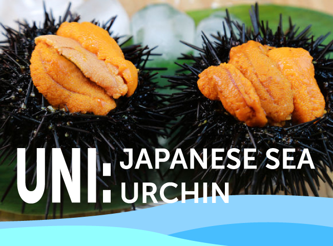 Uni: Japanese Sea Urchin Dishes for Seasoned Seafood Lovers
