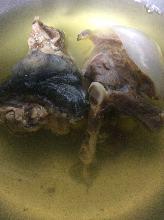 Softshell turtle hotpot