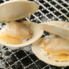 Grilled common orient clams