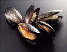 Mussels steamed in wine