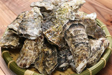 Assorted oysters