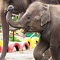 Ichihara Elephant Kingdom
