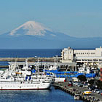 Misaki port(Misaki fishing port)
