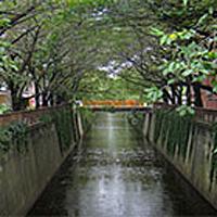 메구로가와(강)