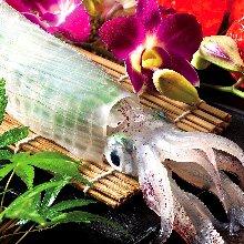 화살오징어 활어회