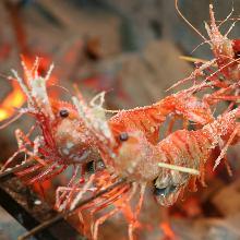 炭火烤鲜虾