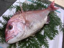 金目鲷(生鱼片)