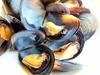 酒蒸孔雀蛤