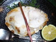 虎河豚魚白