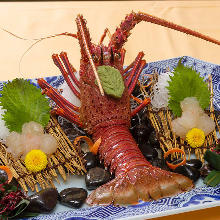 生食整隻伊勢龍蝦片