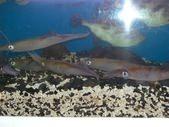 魷魚生魚片