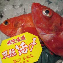 鹽烤喜知次魚或紅燒喜知次魚或喜知次魚火鍋