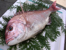 金目鯛(生魚片)